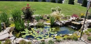 Key Reasons to Utilize Professional Spring Pond Clean-Out Services