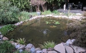 What You Need to Know About Koi Ponds in Winter