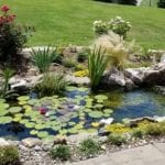 Pond Services in Raleigh, North Carolina
