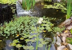 What You Need to Know About Pond Maintenance Services