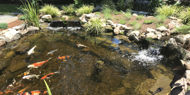 Pond Contractor in Raleigh, North Carolina