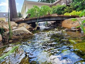 4 Important Questions to Ask Your Pond Contractor