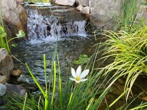 Top Signs You Need Pond Services