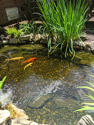 Key Tips for Spring Pond Clean-Out